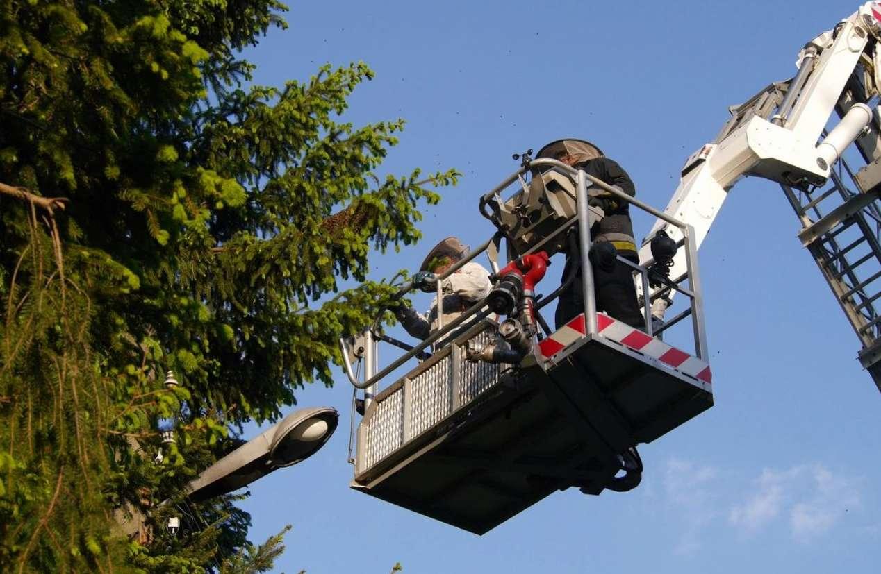 Woodard Tree Service